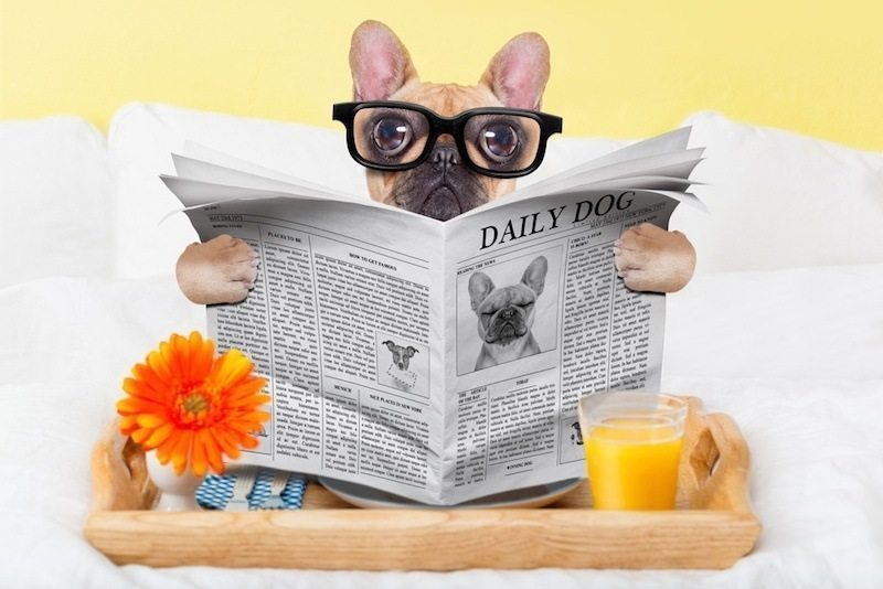 dog reading the paper