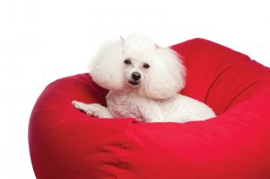 bean bag dog beds