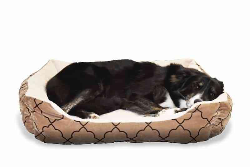 senior dog beds