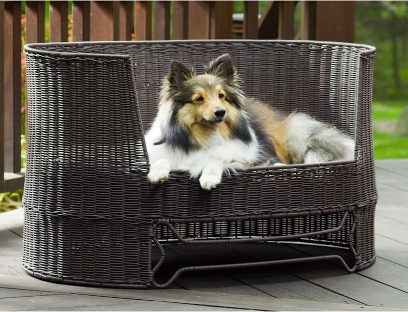 refined canine dog bed