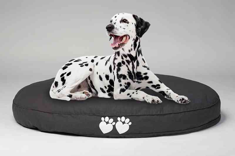 dog bed for arthritis