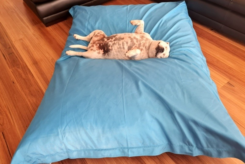 best dog beds for extra large dogs